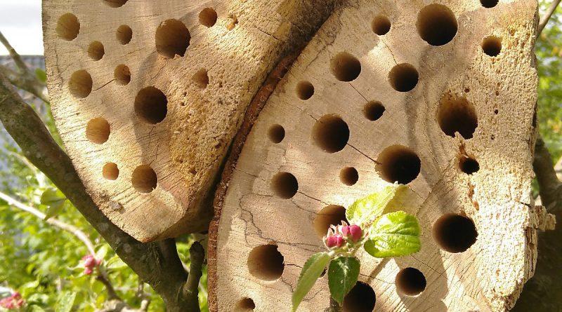 bihotell i äppelträd