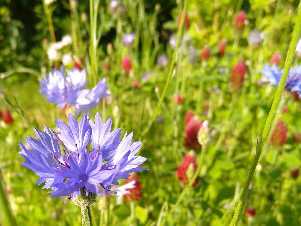 bivänliga blommor
