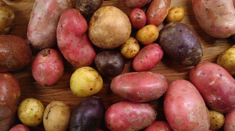 tre sorters potatis
