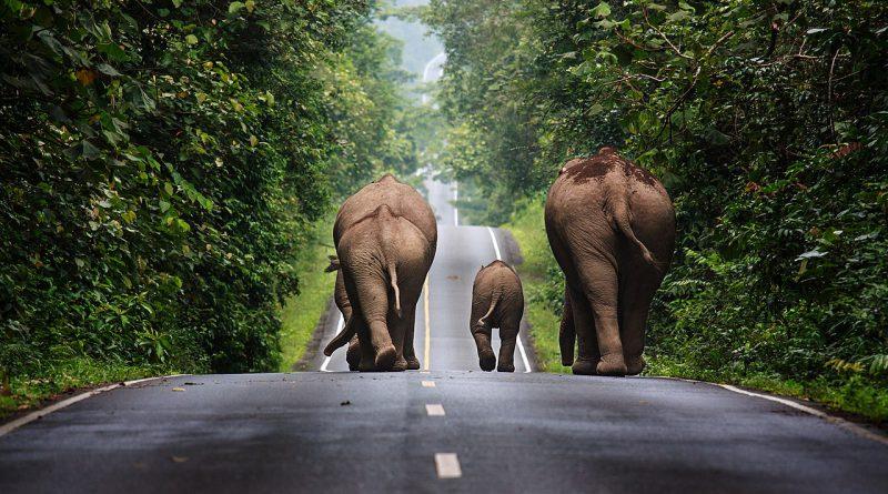 Bikupestaket avskräcker elefanter