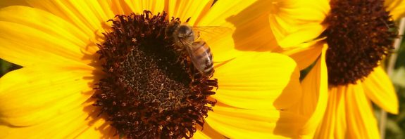 bin får inte sova ordentligt